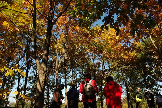 秋の公園散策-2021
